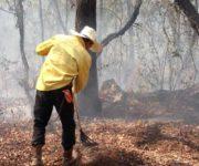 Continúan trabajando en 4 frentes para abatir incendio en Jalpan