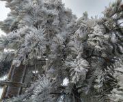 Hasta -3 grados en zonas altas de San Joaquín y Pinal de Amoles, también se visualiza escarcha