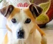 Alertan en colonia Las Águilas, SJR, sobre maltrato y sacrificio cruel de al menos un perro