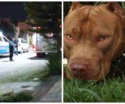 Dos pitbull matan a su dueño en SJR -ÚLTIMA HORA-