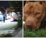 Dos pitbull matan a su dueño en San Juan del Río